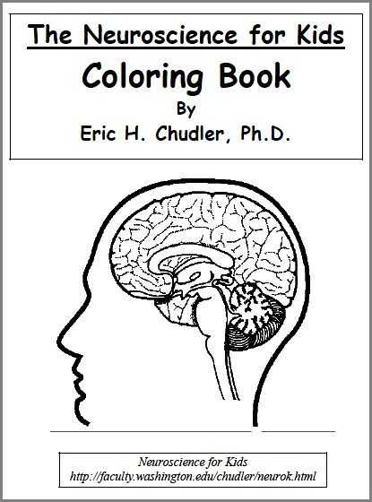 Brain Coloring Worksheet Along with 212 Best Colour Me Images On Pinterest