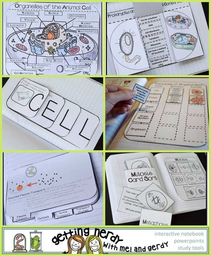Cell Activity Worksheet or 107 Best Cells Images On Pinterest