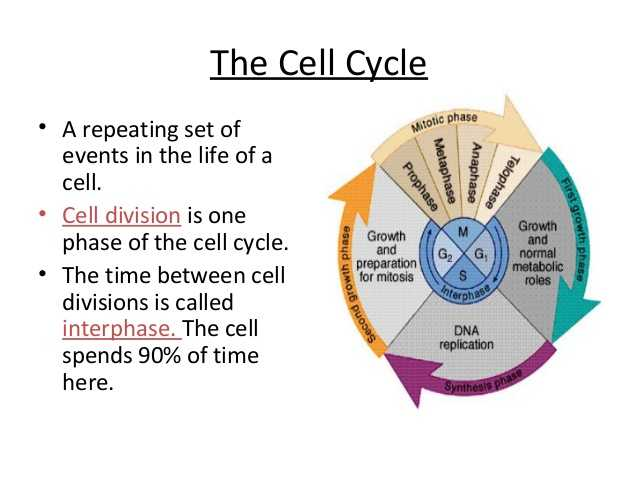 Cell Cycle and Dna Replication Practice Worksheet Key Also Cell Cycle Coloring Worksheet Kidz Activities