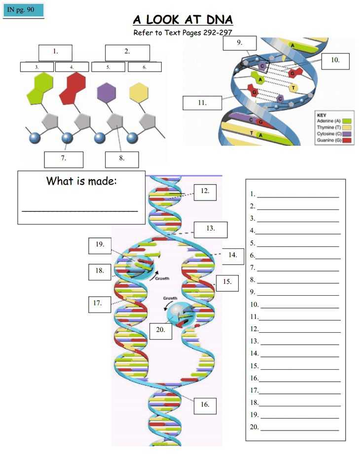 Cell Cycle and Dna Replication Practice Worksheet Key or 183 Best Genetics Images On Pinterest