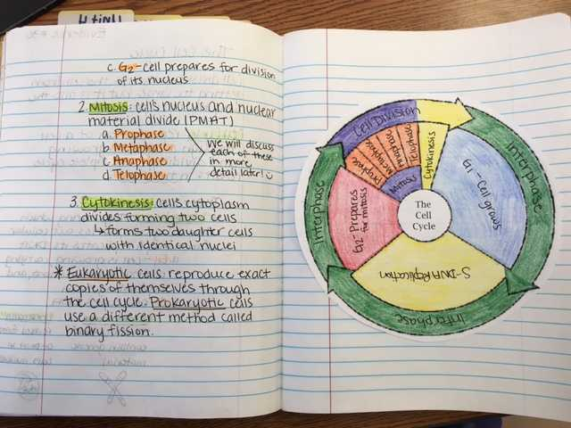 Cell Cycle Coloring Worksheet Answer Key or Worksheets 42 Re Mendations the Cell Cycle Worksheet Hi Res