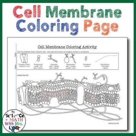 Cell Membrane Coloring Worksheet Along with Worksheets 49 Beautiful Cell Membrane Coloring Worksheet Answers