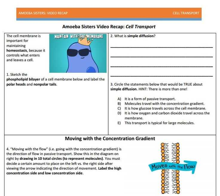 Cell Transport Worksheet Answer Key Also 27 Best Amoeba Sisters Handouts Images On Pinterest