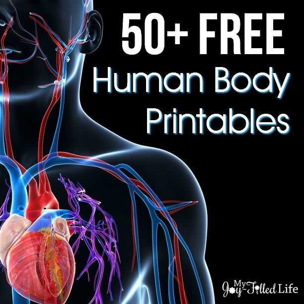 Chapter 1 Introduction to Human Anatomy and Physiology Worksheet Answers or 50 Free Human Body Printables
