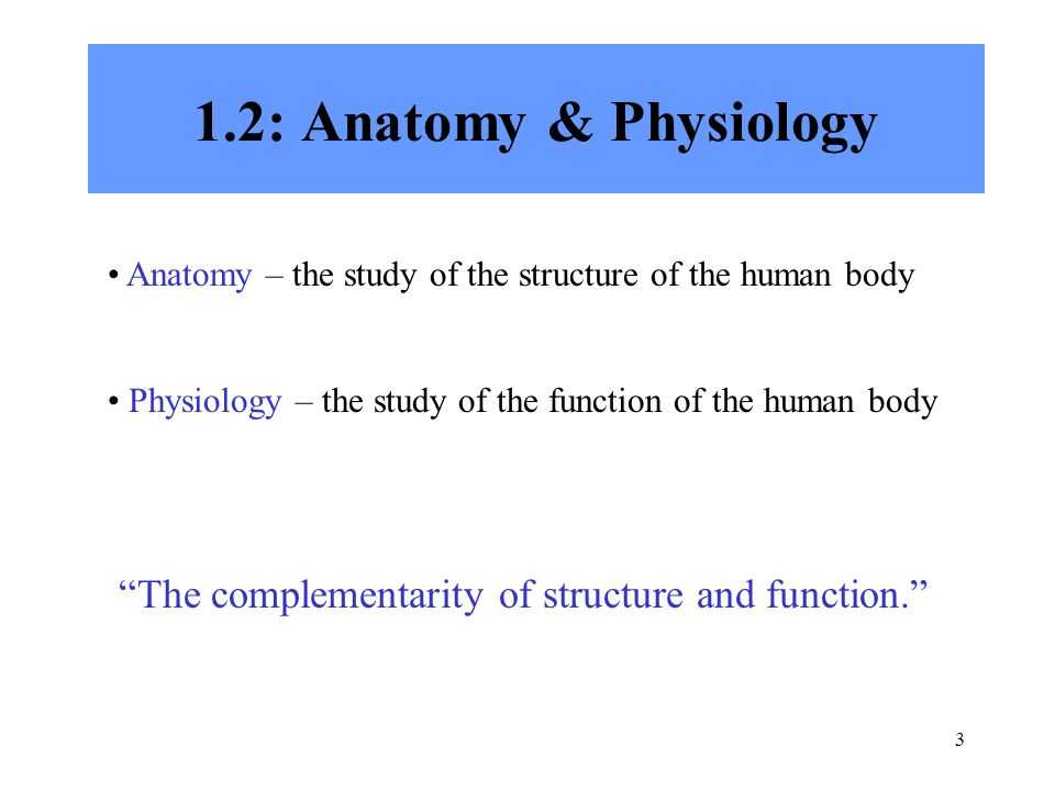 Chapter 1 Introduction to Human Anatomy and Physiology Worksheet Answers or Fein Chapter 1 Anatomy and Physiology Quiz Ideen Menschliche