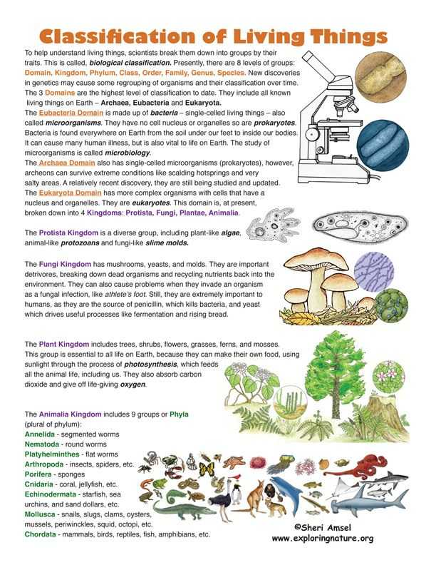 Characteristics Of Living Things Worksheet together with Classification Of Living Things Find This On Exploringnature