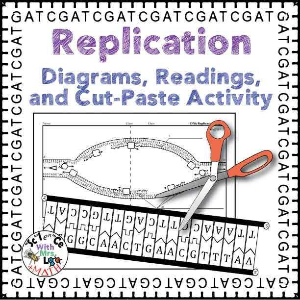 Dna and Replication Worksheet with Dna Replication Activity Diagram and Reading for High School