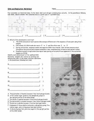 Dna Review Worksheet Answer Key and Dna and Replication Worksheet solon City Schools