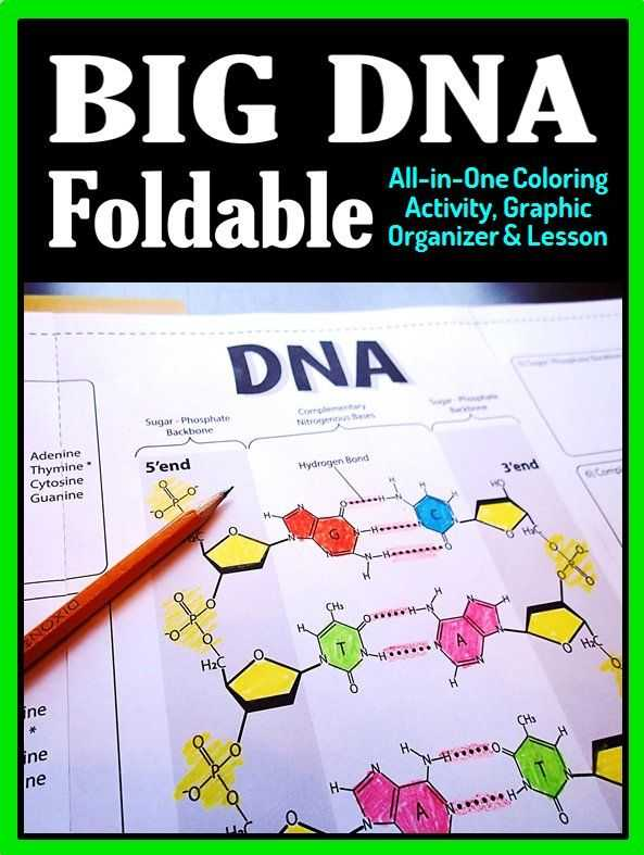 Dna Structure Worksheet as Well as Dna Structure Foldable Big Foldable for Interactive Notebooks or