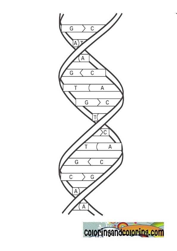 Dna the Double Helix Coloring Worksheet Answers Also 59 Best Fitc Images On Pinterest