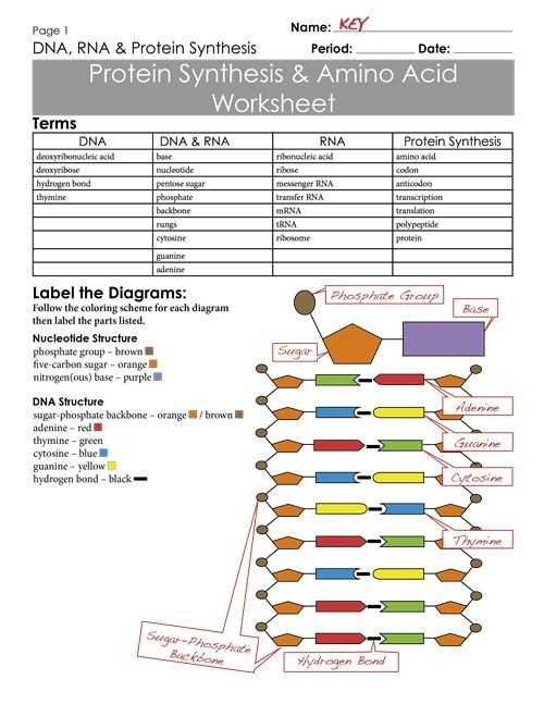 Dna Unit Review Worksheet together with 15 Fresh Worksheet Dna Rna and Protein Synthesis Answer Key