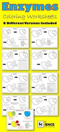 Ecological Relationships Worksheet Also Symbiosis Petition and Predation