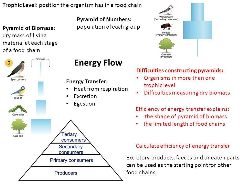 Energy Flow In Living Things Worksheet Also B2 organisms Grouped by Shared Characteristics Continuous