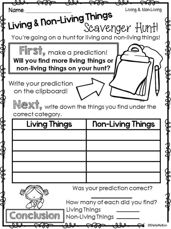 Energy Flow In Living Things Worksheet and 16 Best Kindergarten Science Images On Pinterest