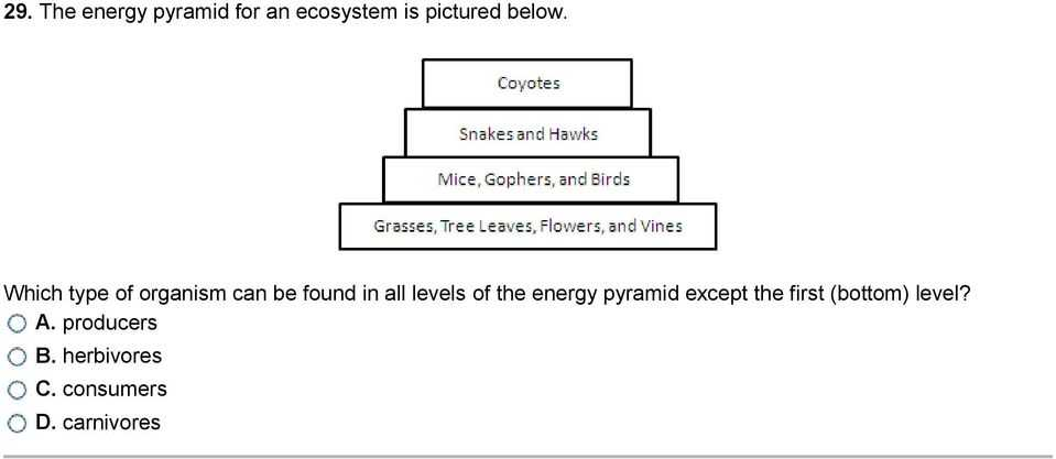Energy Through Ecosystems Worksheet Also the Animals at Higher Levels are More Petitive so Fewer Animals