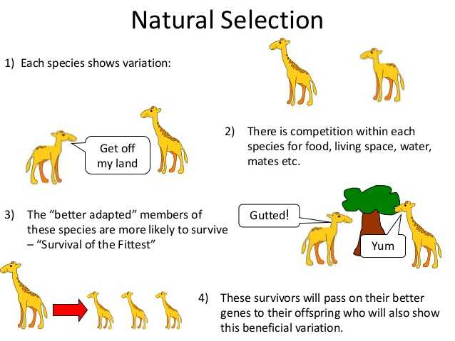 Evolution by Natural Selection Worksheet Answers together with Naturals Selection Google Search
