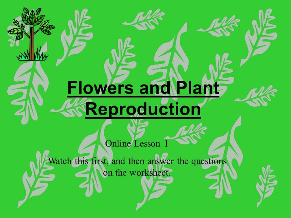 Flower Structure and Reproduction Worksheet Answers and Flowers and Plant Reproduction Line Lesson 1 Watch This First and
