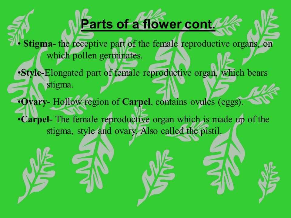 Flower Structure and Reproduction Worksheet Answers with Flower Structure and Reproduction Worksheet Answers Fresh Fill In