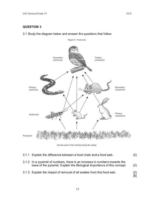 Food Web Practice Worksheet Also A Food Web Worksheet Answers Worksheets for All