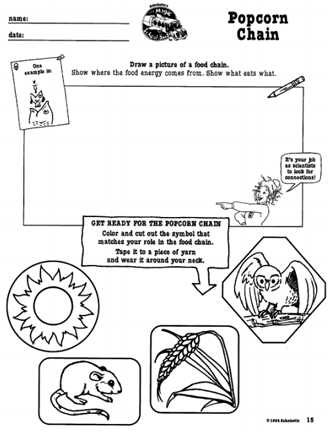 Food Web Practice Worksheet Also Here S A Magic School Bus Activity On Food Chains