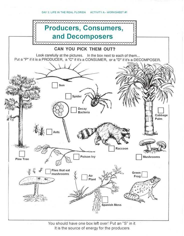 Food Web Practice Worksheet and 161 Best Food Chains Webs Ecosystems and Biomes Images On