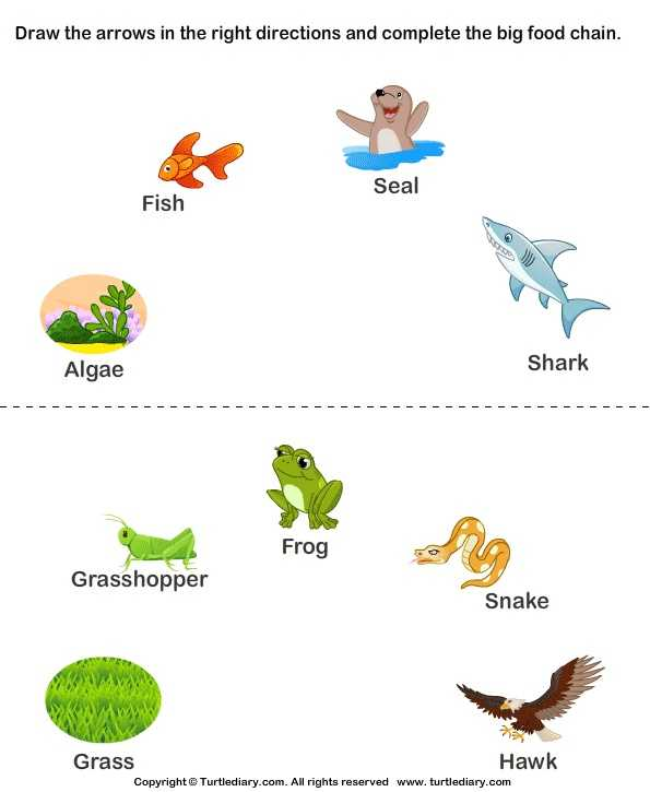 Food Web Practice Worksheet with 161 Best Food Chains Webs Ecosystems and Biomes Images On
