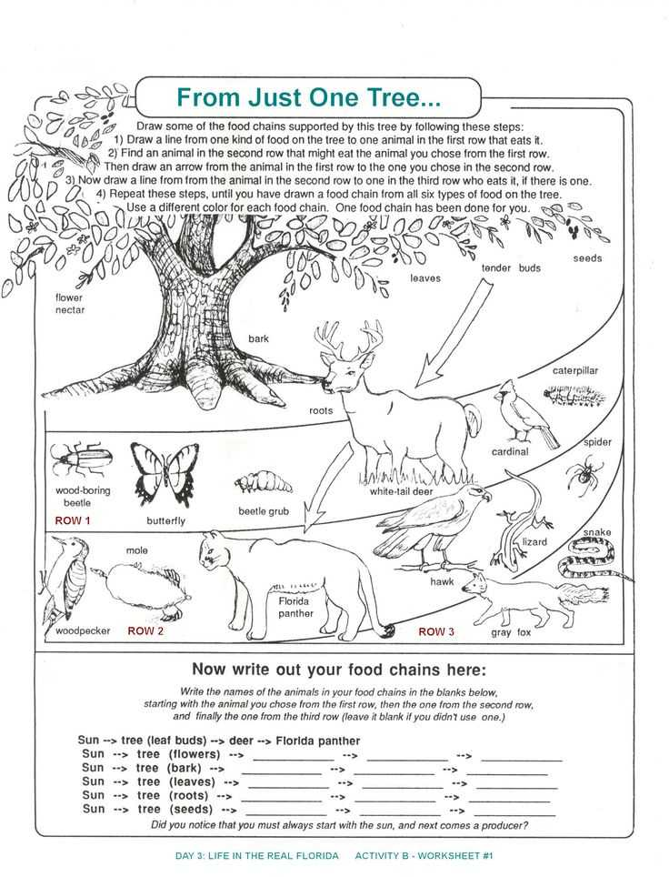 Food Web Worksheet Answer Key Also 251 Best Animal Food Chains Images On Pinterest