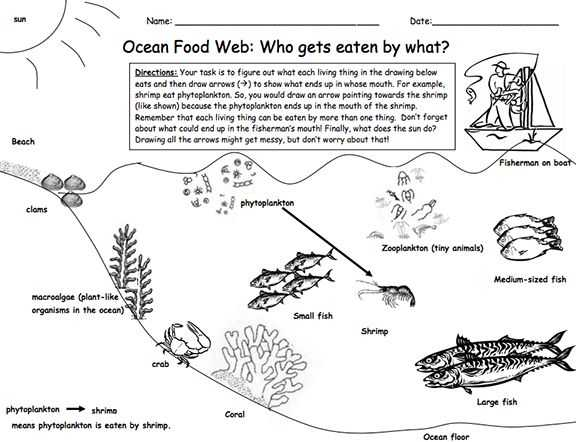 Food Web Worksheet with 101 Best Food Chains Webs Images On Pinterest