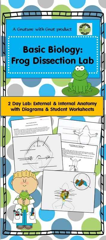 Frog Dissection Worksheet Answers together with 22 Best Dissection Images On Pinterest
