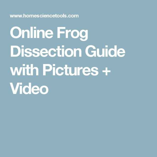 Frog Dissection Worksheet Answers together with Frog Dissection Worksheet Answers New 9 Best Frog Dissection