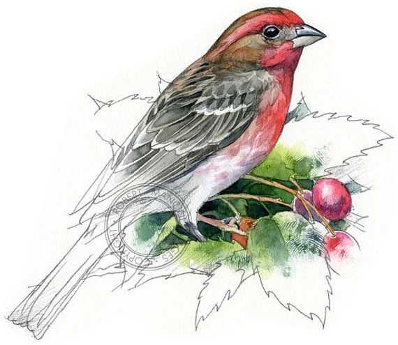 Galapagos island Finches Worksheet and 16 Best Book Images On Pinterest
