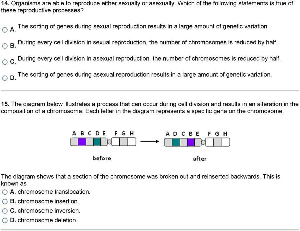 Gene and Chromosome Mutation Worksheet with Mutations and Genetic Variability 1 What is Occurring In the