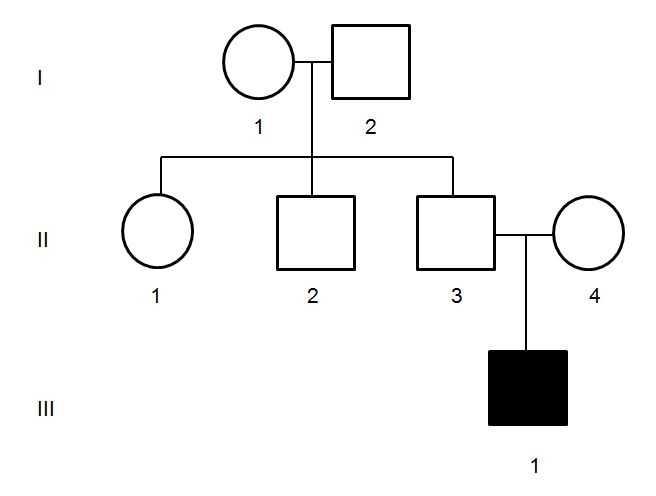Genetics Pedigree Worksheet Key Along with All About Pedigrees Pedigrees for Predicting Genetic Traits