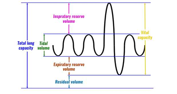 Graphing the Tides Worksheet Answers Along with Respiratory Volumes