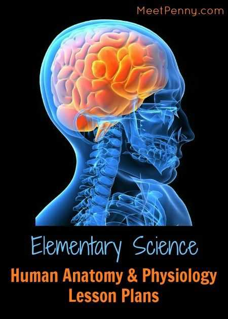 Human Body Pushing the Limits Brain Power Worksheet Answers as Well as 53 Best School Human Body Images On Pinterest