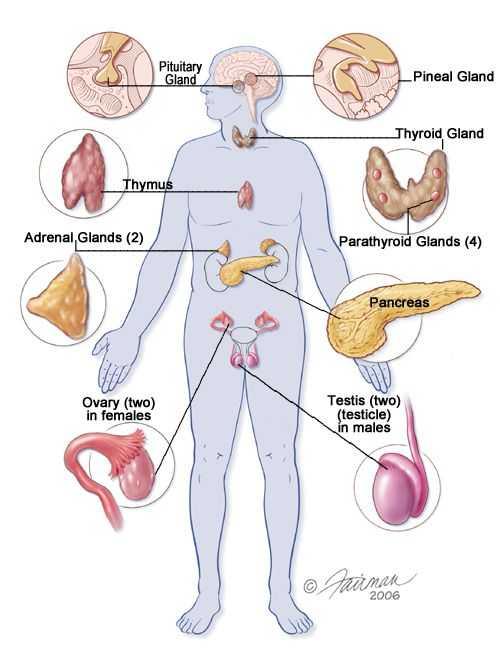 Human Endocrine Hormones Worksheet Key Along with Human Physiology Endocrine System