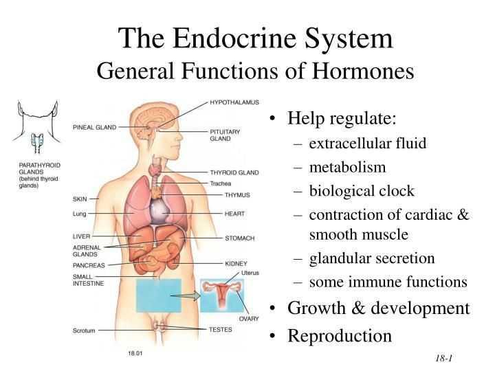Human Endocrine Hormones Worksheet Key and Human Hormones Worksheet Gallery Worksheet Math for Kids