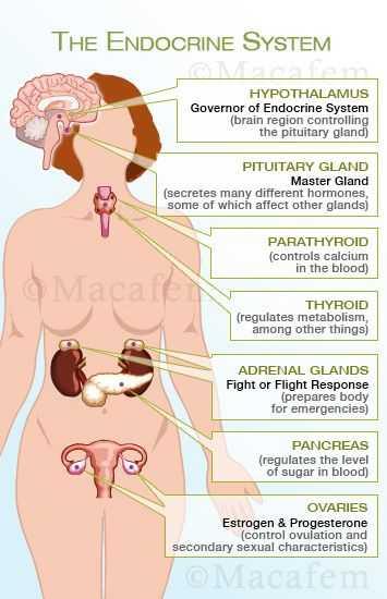 Human Endocrine Hormones Worksheet Key with 49 Best Endocrinology Images On Pinterest
