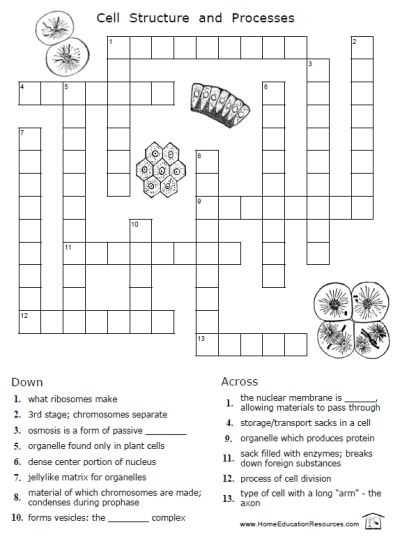 Inside the Cell Worksheet Answers and Free Cells Worksheets 12 Pages Easy to From