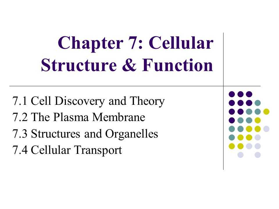Lesson 7.2 Cell Structure Worksheet Answers Along with Chapter 7 Cellular Structure & Function Ppt Video Online