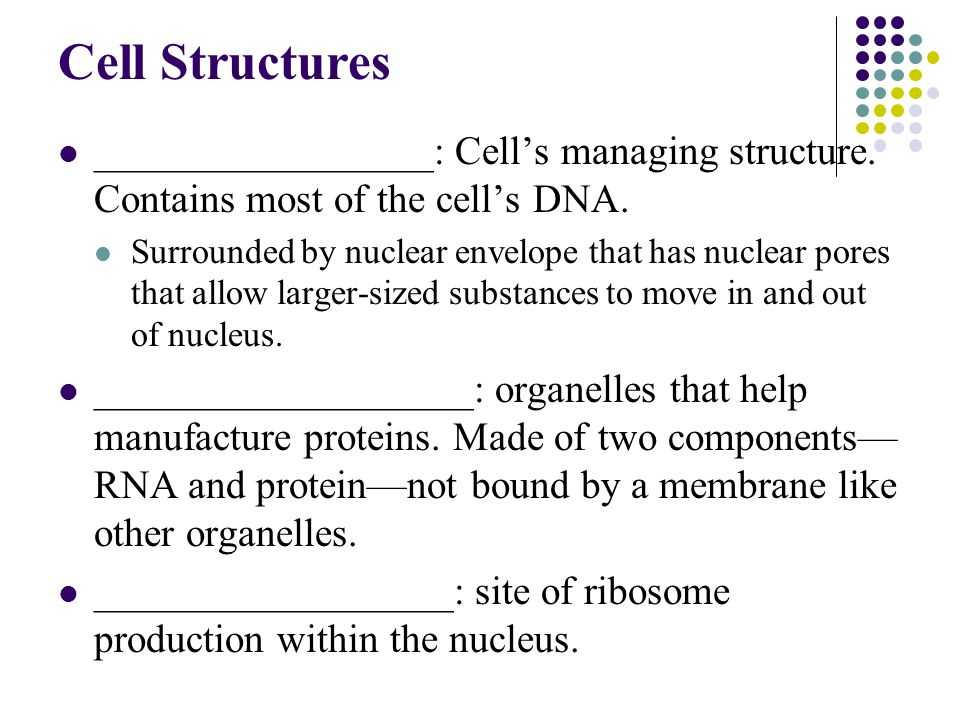Lesson 7.2 Cell Structure Worksheet Answers and Chapter 7 Cellular Structure & Function Ppt Video Online