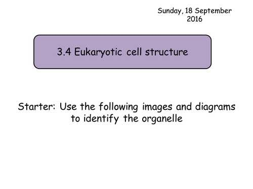 Lesson 7.2 Cell Structure Worksheet Answers with M Est S Shop Teaching Resources Tes