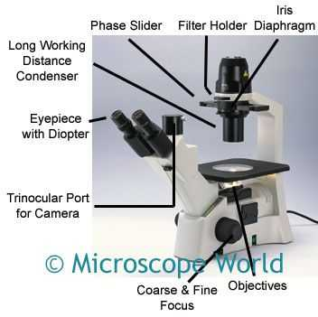 Measuring with A Microscope Worksheet or 16 Best Parts Of the Microscope Images On Pinterest