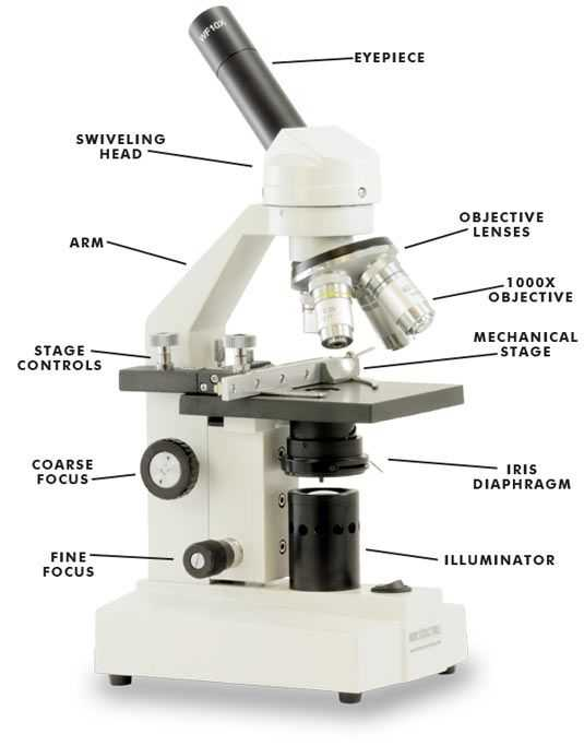 Microscope Parts and Use Worksheet Answer Key together with 22 Best Learnt Images On Pinterest