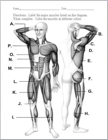 Muscular System Worksheet Along with A Child S Muscle Strength is Tested During A Physical Exam