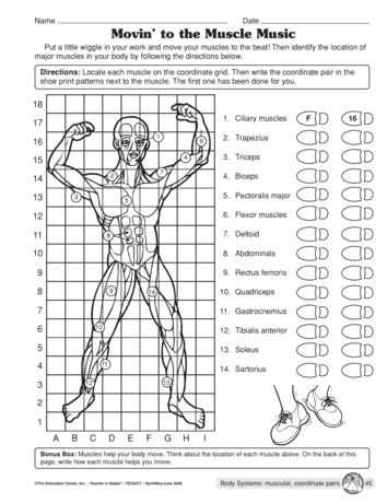 Muscular System Worksheet together with Pin by K M On Nursing Pinterest