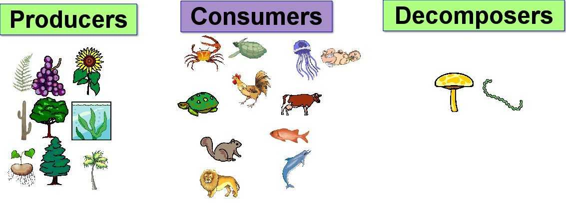 Producer Consumer Decomposer Worksheet Along with some Parts Of the Food Chain Producers Consumers De Posers