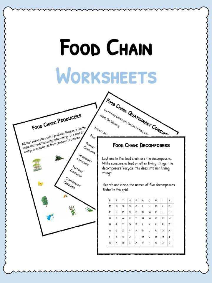 Producer Consumer Decomposer Worksheet or Food Chain Worksheet