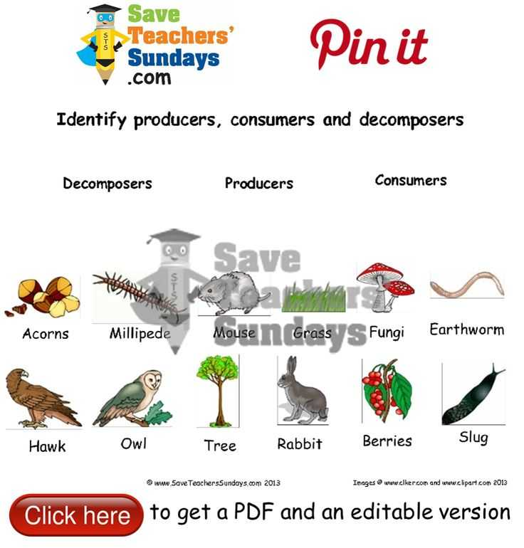 Producer Consumer Decomposer Worksheet with 23 Best Year 1 Animals Including Humans Lesson Plans Worksheets