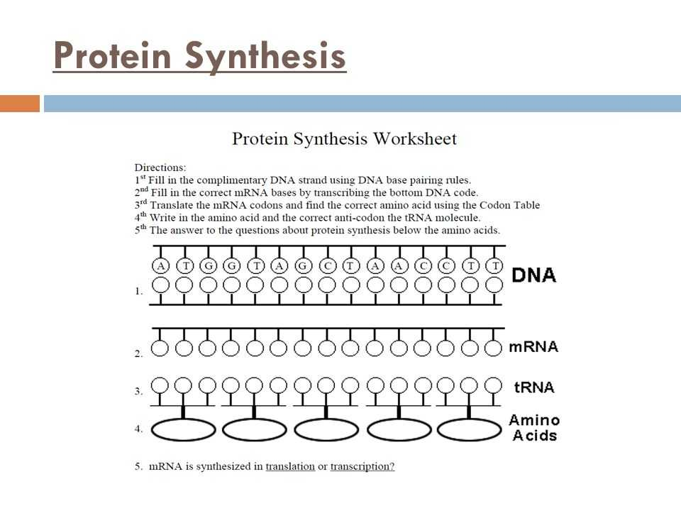 Protein Synthesis Worksheet Answers as Well as Unique Transcription and Translation Worksheet Answers New Rna and